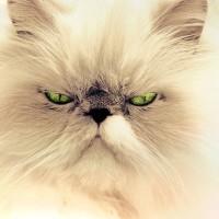 cat-694407_640